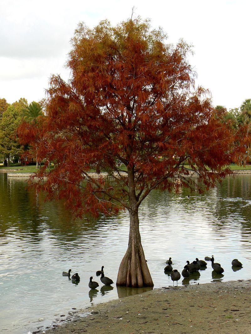 eolalake_treeblackbirds.jpg
