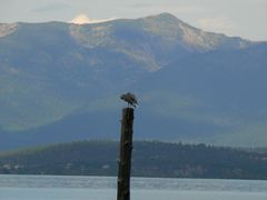 flathead_lakesiderestaurant_bird.jpg
