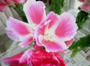 florrosa.jpg