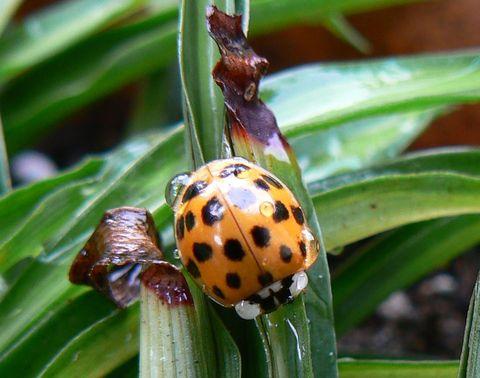 ladybug_rain1.jpg