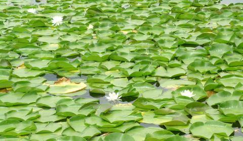 lagoplanta.jpg