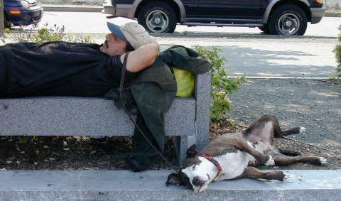 mandogsleeping.jpg