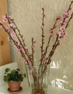 peacheflowerre.jpg