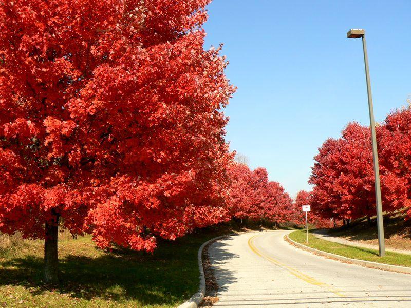 redtrees_rivaroadstreet.jpg