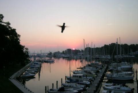 sunrisebeijaflor.jpg