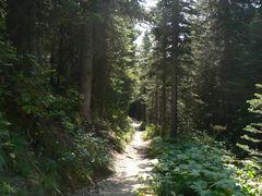trilha_hiking_iceberglake_glacierpark240.jpg