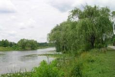 willow.jpg