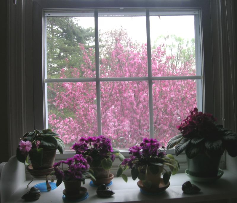 windowguestroom_spring14april.jpg