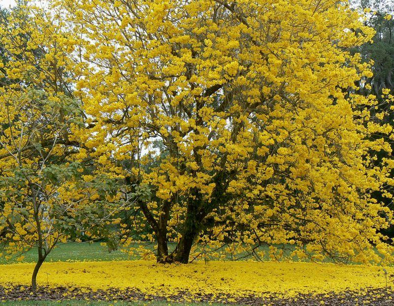 yellowblosson_leugarden_800.jpg